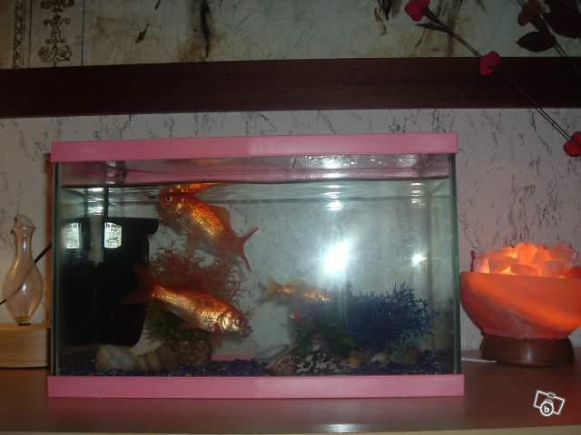 Le respect du poisson rouge - Page 2 90833710