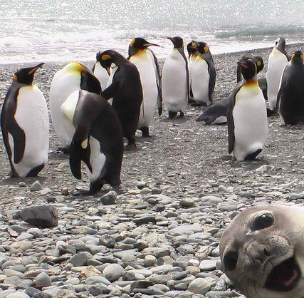 Trop drôle! Pingou10