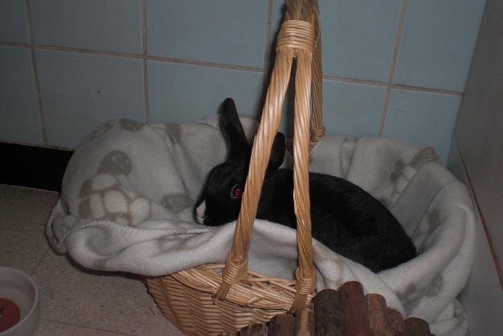 Lolita, petite lapinette noire Cimg5510