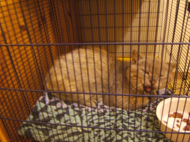 Cartouche, chat gris sauvage Dscf5210