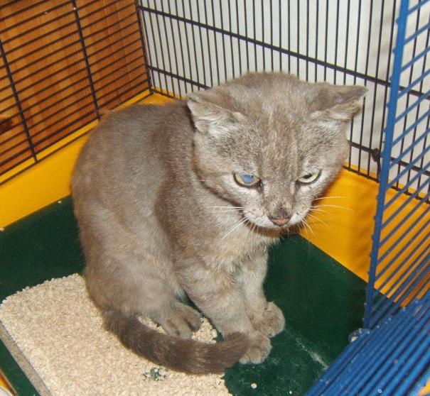 Cartouche, chat gris sauvage Dscf5212