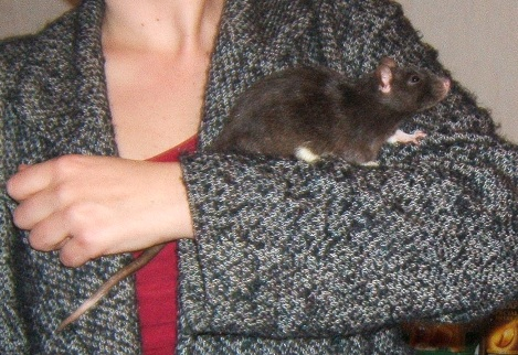18 rats cherchent FA Dscf6823