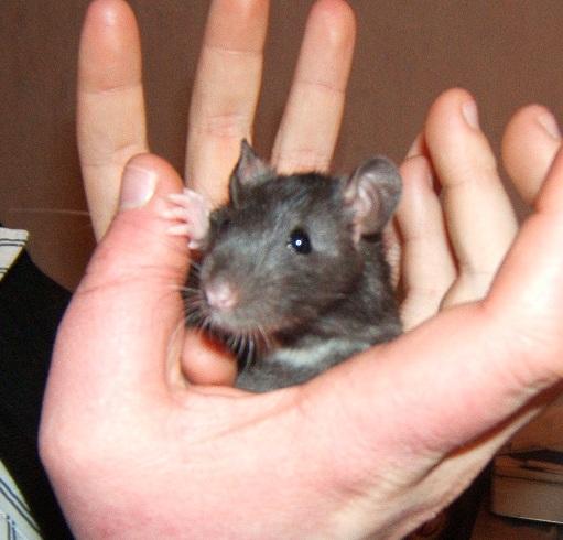 18 rats cherchent FA Dscf6826