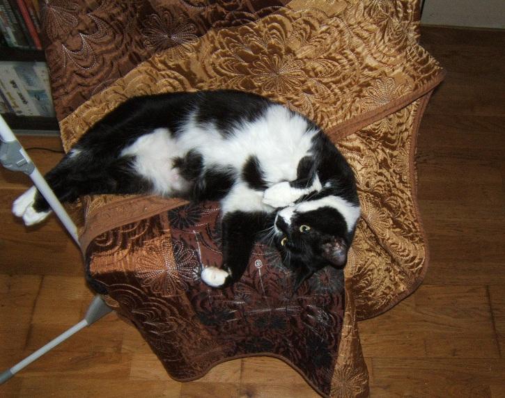 Chipie, 3 ans, noire et blanche Dscf6831