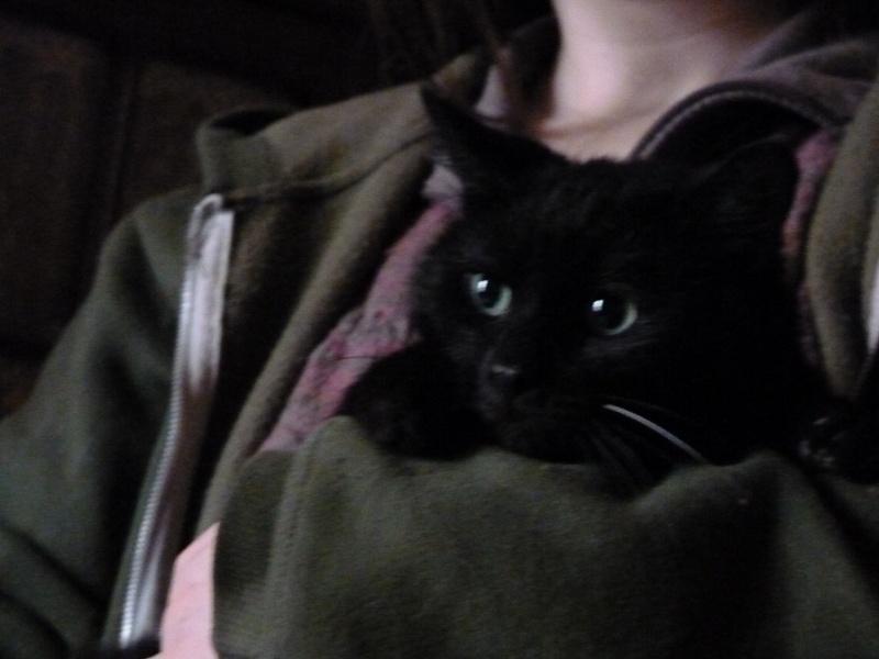 Ebène, adorable noiraud Fiv+ P1000111