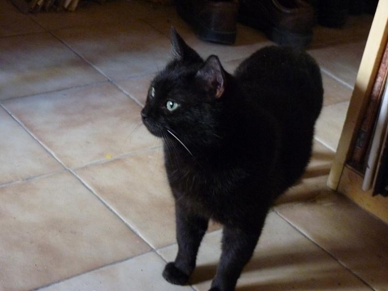 Ebène, adorable noiraud Fiv+ P1000112