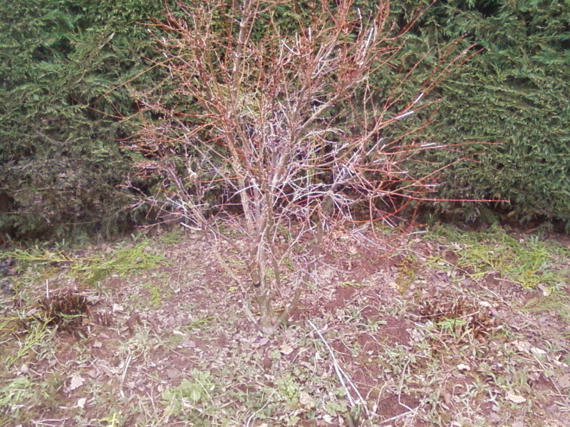 Are these Acers  worth digging up. 01110