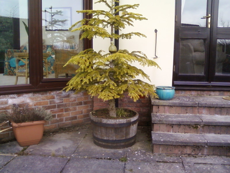 Are these Acers  worth digging up. 02010