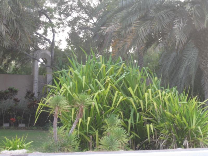 suite photos de jardin d'agaves et autres 2010_115