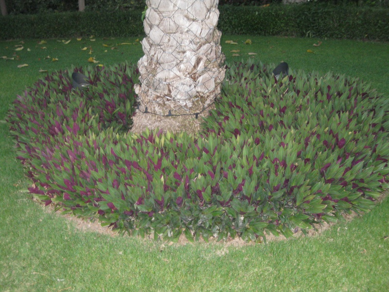 suite photos de jardin d'agaves et autres 2010_211