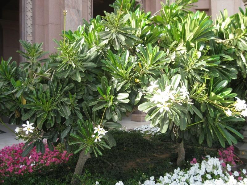 suite photos de jardin d'agaves et autres 2010_611
