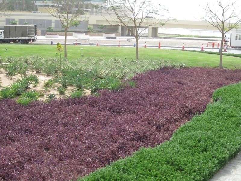 suite photos de jardin d'agaves et autres I_201010