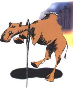 Résultats de recherche d'images pour «aiguille chameau»