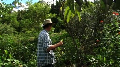 """nouveau """"jardinage"""" : recréer un nouvel écosystème Vlcsna10"""
