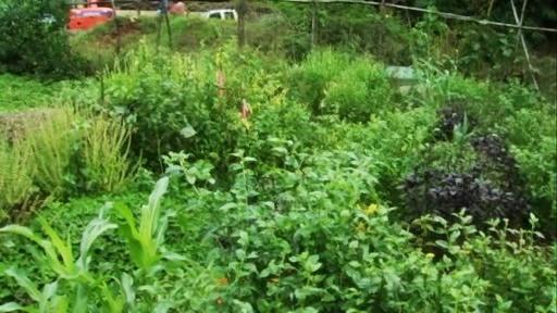 """nouveau """"jardinage"""" : recréer un nouvel écosystème Vlcsna11"""