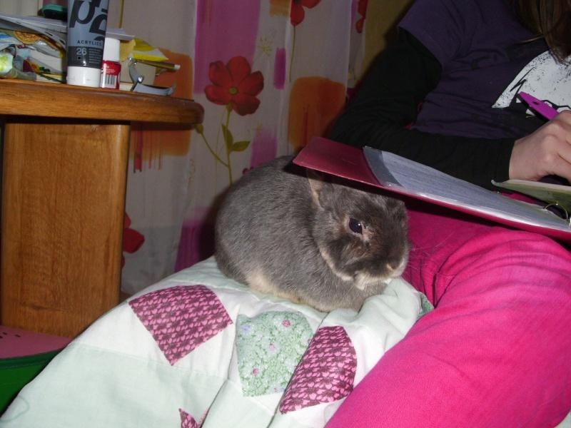 Tinou, lapin nain bleu,jeune - Page 5 Dsci0410