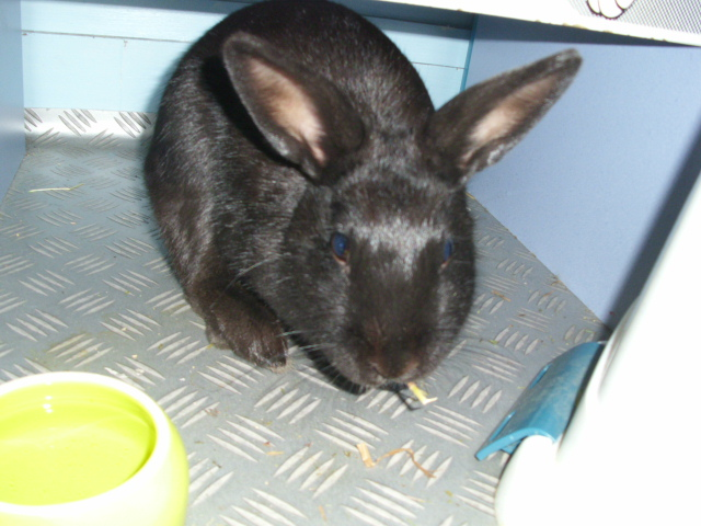 Olive, lapine noire, jeune Je_man10