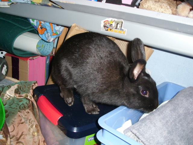 Olive, lapine noire, jeune - Page 2 Olive_14