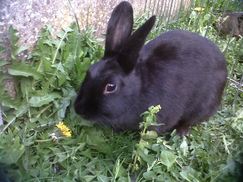 Olive, lapine noire, jeune - Page 5 Olive_24