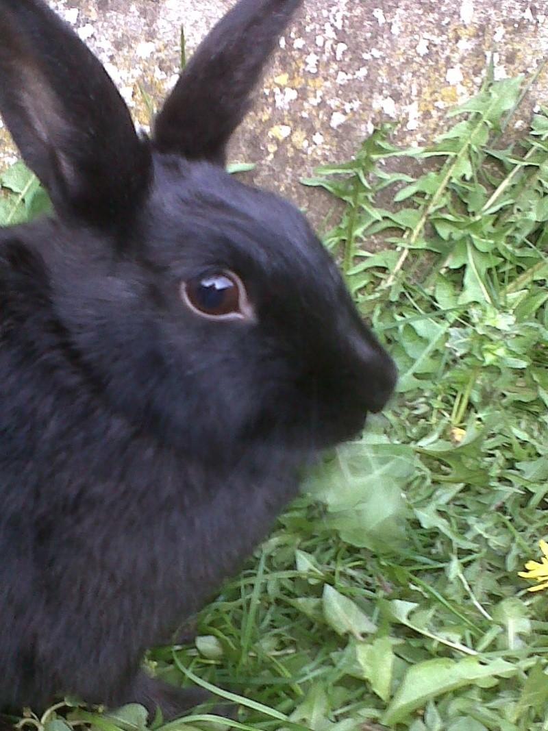 Olive, lapine noire, jeune - Page 5 Olive_25