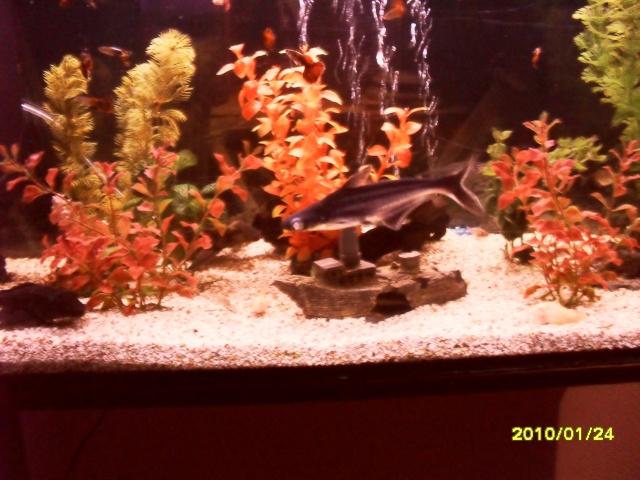 Mon requin domestique Animau21
