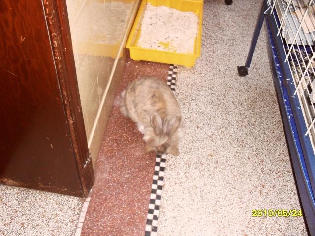 ma lapine Ratoui23