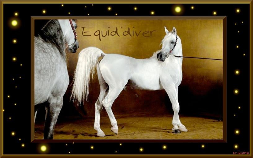 Equid'diver