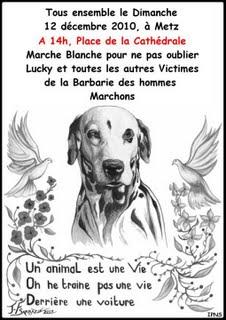 Marche pour LUCKY Affich12