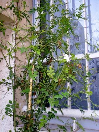les plantes qui poussent dans ma région Photo053