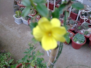 les plantes qui poussent dans ma région Photo054