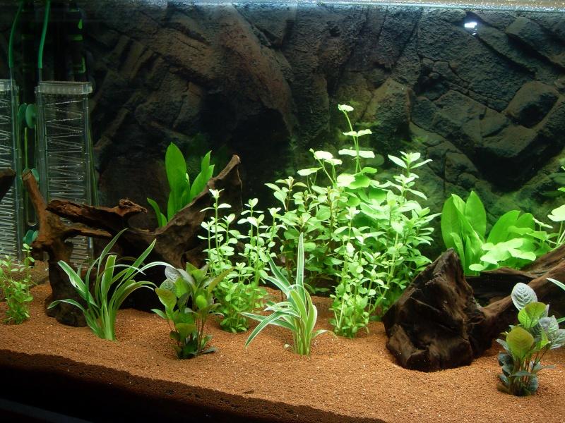 Aquarium 450l (Chris78fr) Sdc12012