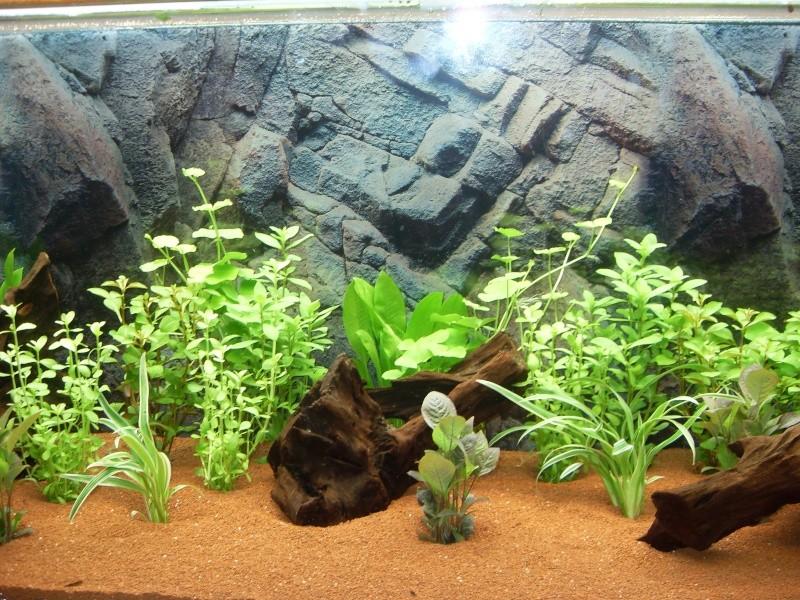 Aquarium 450l (Chris78fr) Sdc12013