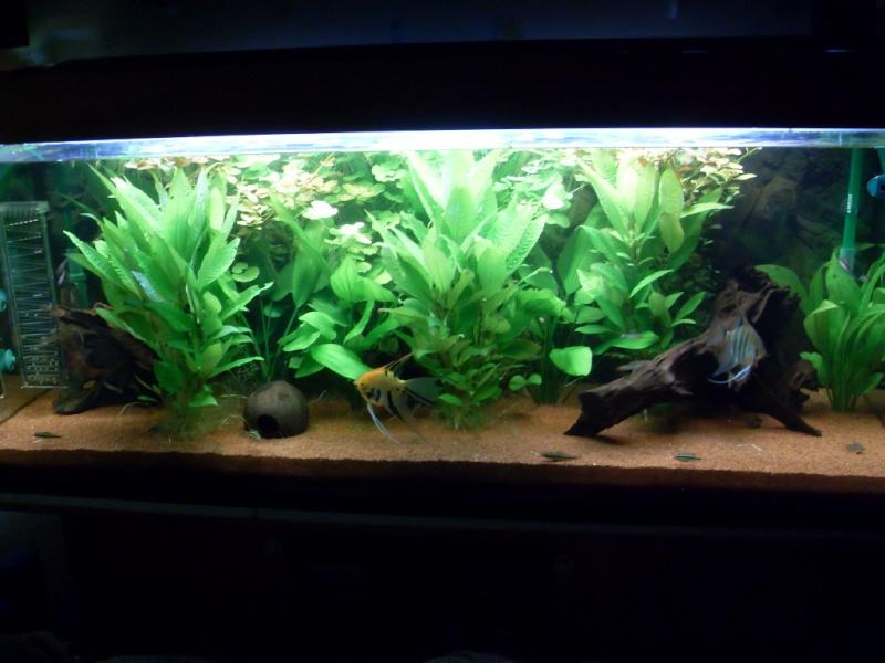 Aquarium 450l (Chris78fr) Sdc12113