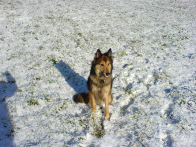 Snow Camouflage Dsc02125