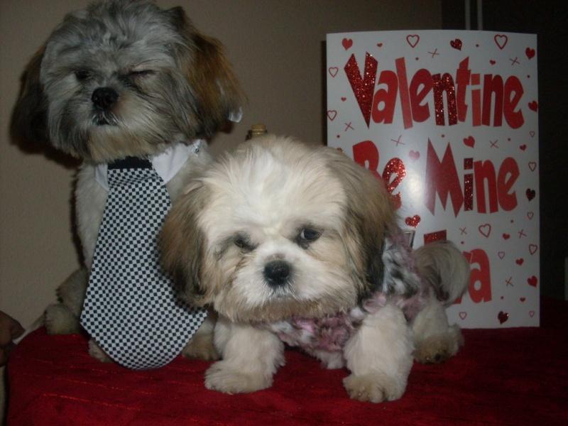 Valentine Album Vallco12
