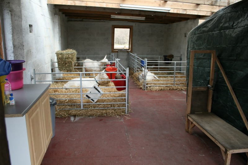 Our Goat Shed- warning lots of pictures! Daryl_10