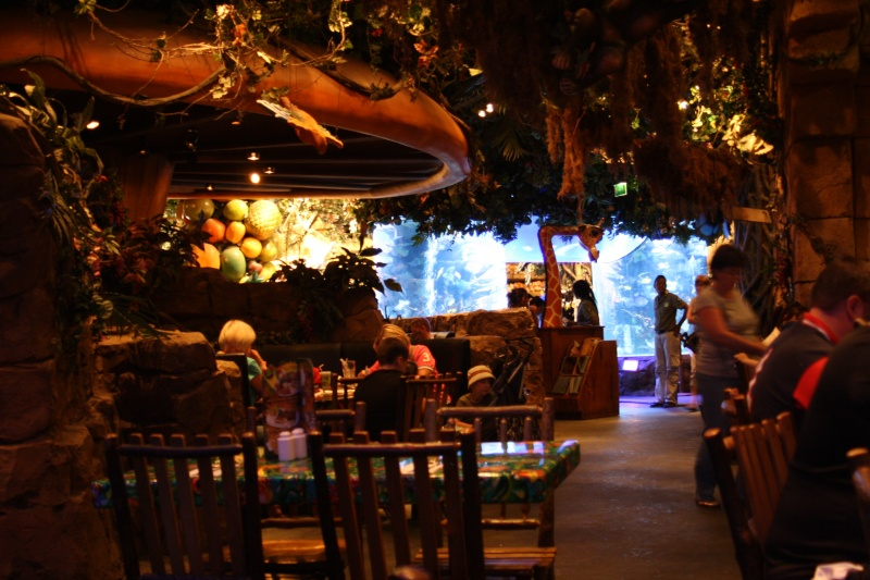 rainforest cafe - Page 2 Img_2119