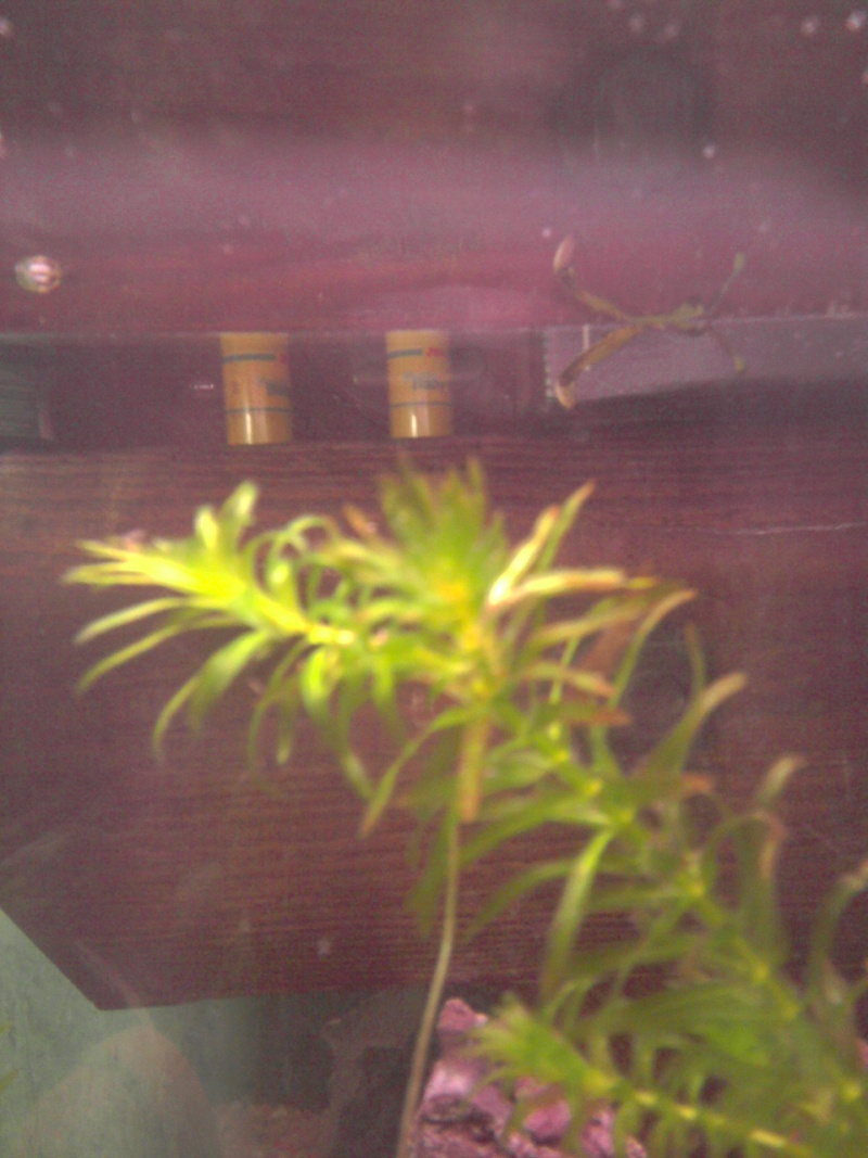 plante qui deviennent marron 15410