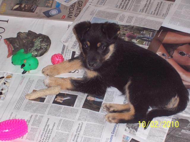 Valencia, cachorritos en peligro 10-02-10