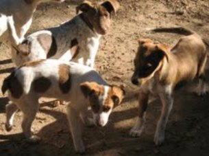 Moriran 23 cachorros ¡¡Ayuda urgente!! 21cach10