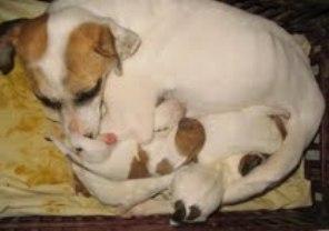 Moriran 23 cachorros ¡¡Ayuda urgente!! 9cacho10