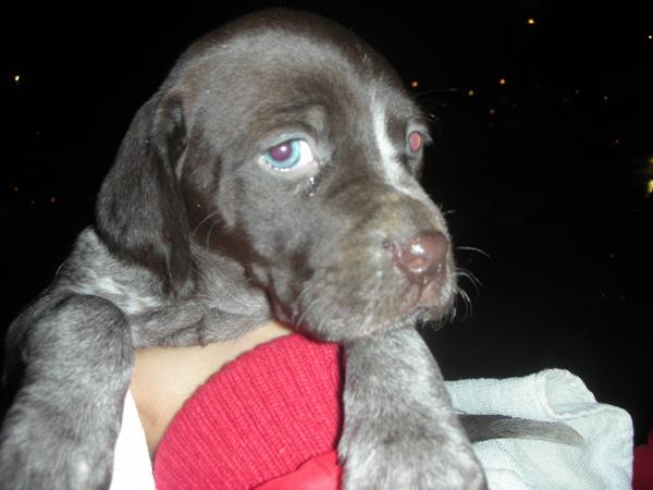 Cachorrita de 1 mesecito abandonada Cachor10