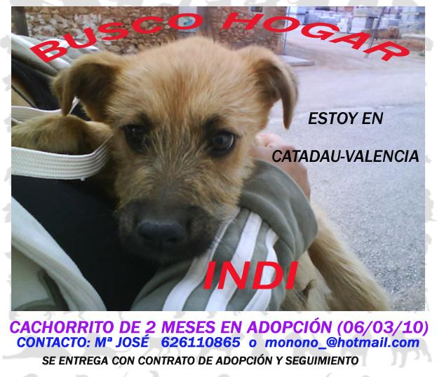 Carteles de mis nenes en adopción (Valencia) Cartel11