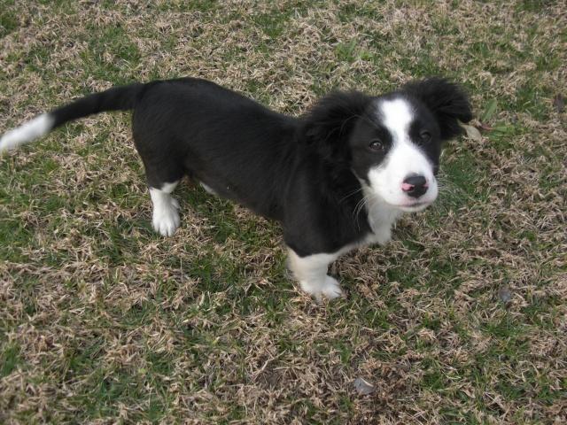¡Urgente! casa de acogida para cachorrito Cimg2111