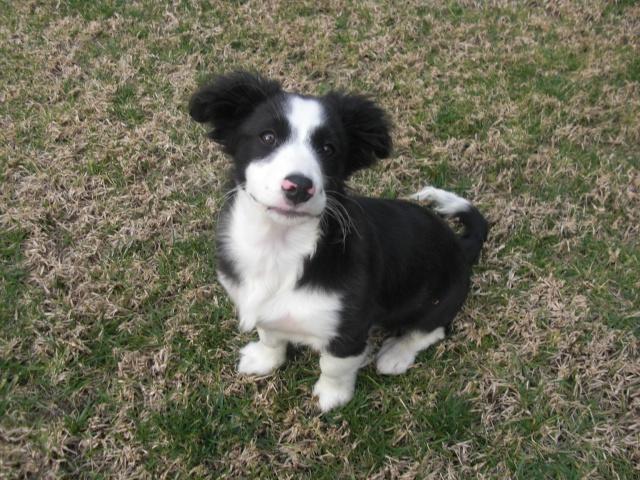 ¡Urgente! casa de acogida para cachorrito Cimg2112