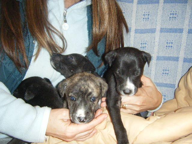 7 Cachorritos Dscf3010
