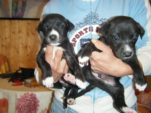 7 Cachorritos Dscf3011