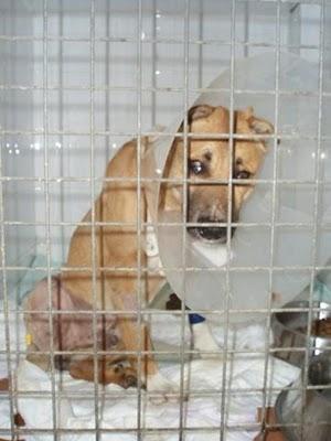 Terrible caso de compasión (Valencia) P1010114