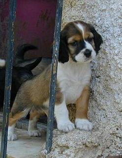 Cachorritos, tamaño pequeño (Valencia) Post10