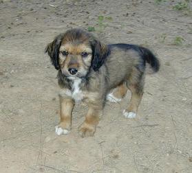 Cachorritos, tamaño pequeño (Valencia) Post210